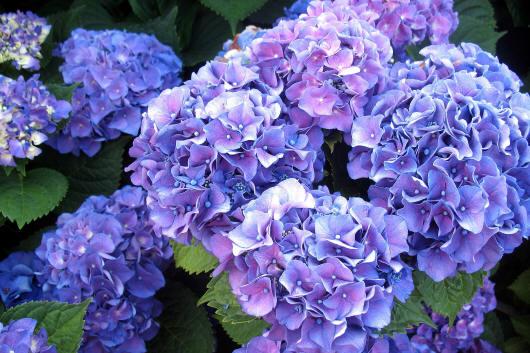 картинки цветов с названиями