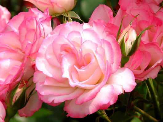 большие фотографии цветов и букетов