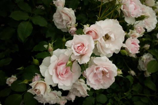 цветочный сборник