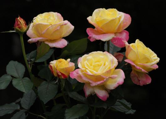 цветы разных расцветок и сортов