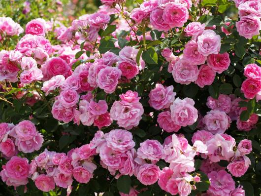 разноцветные цветы и букеты