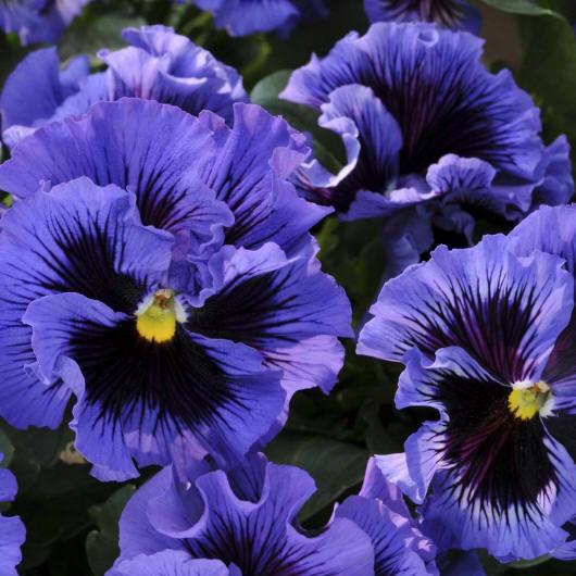 фотографии с цветами