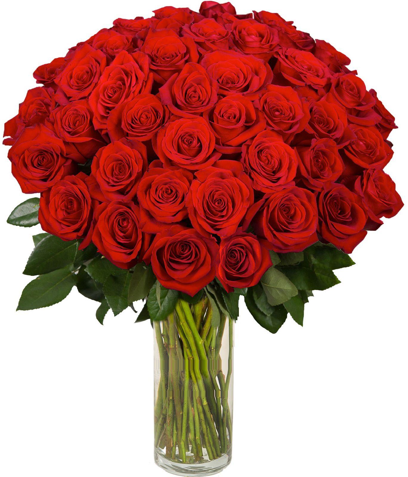Разновидности и сорта цветка роза фото и описание