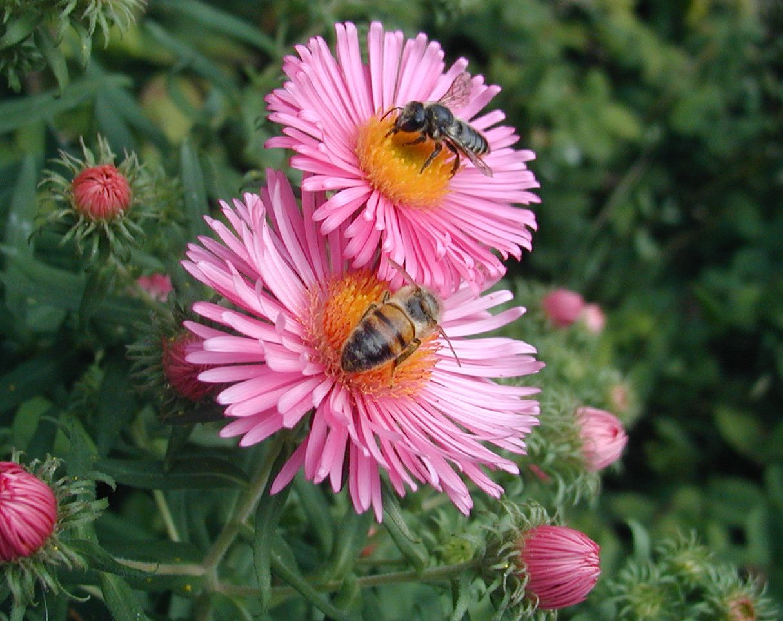 Картинки красивые пчелки