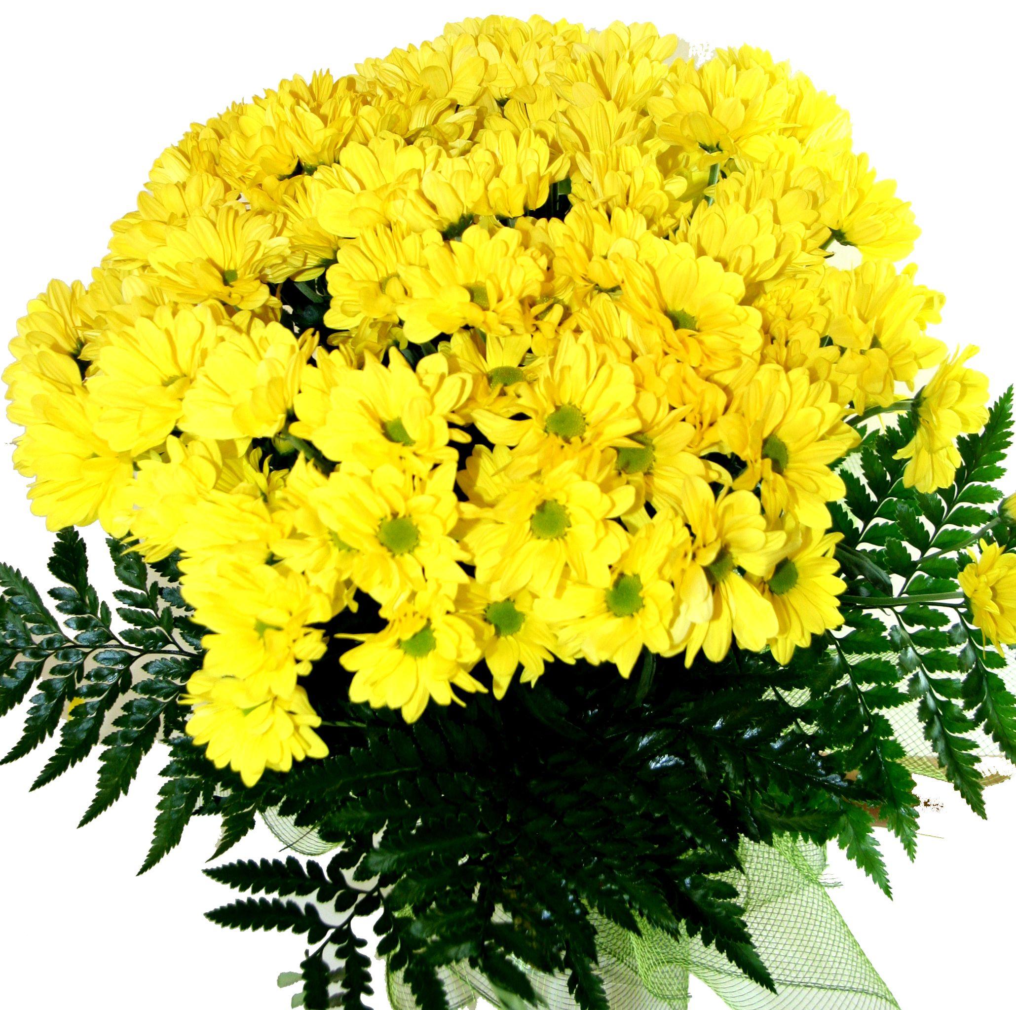 названия цветов и их названия с фото