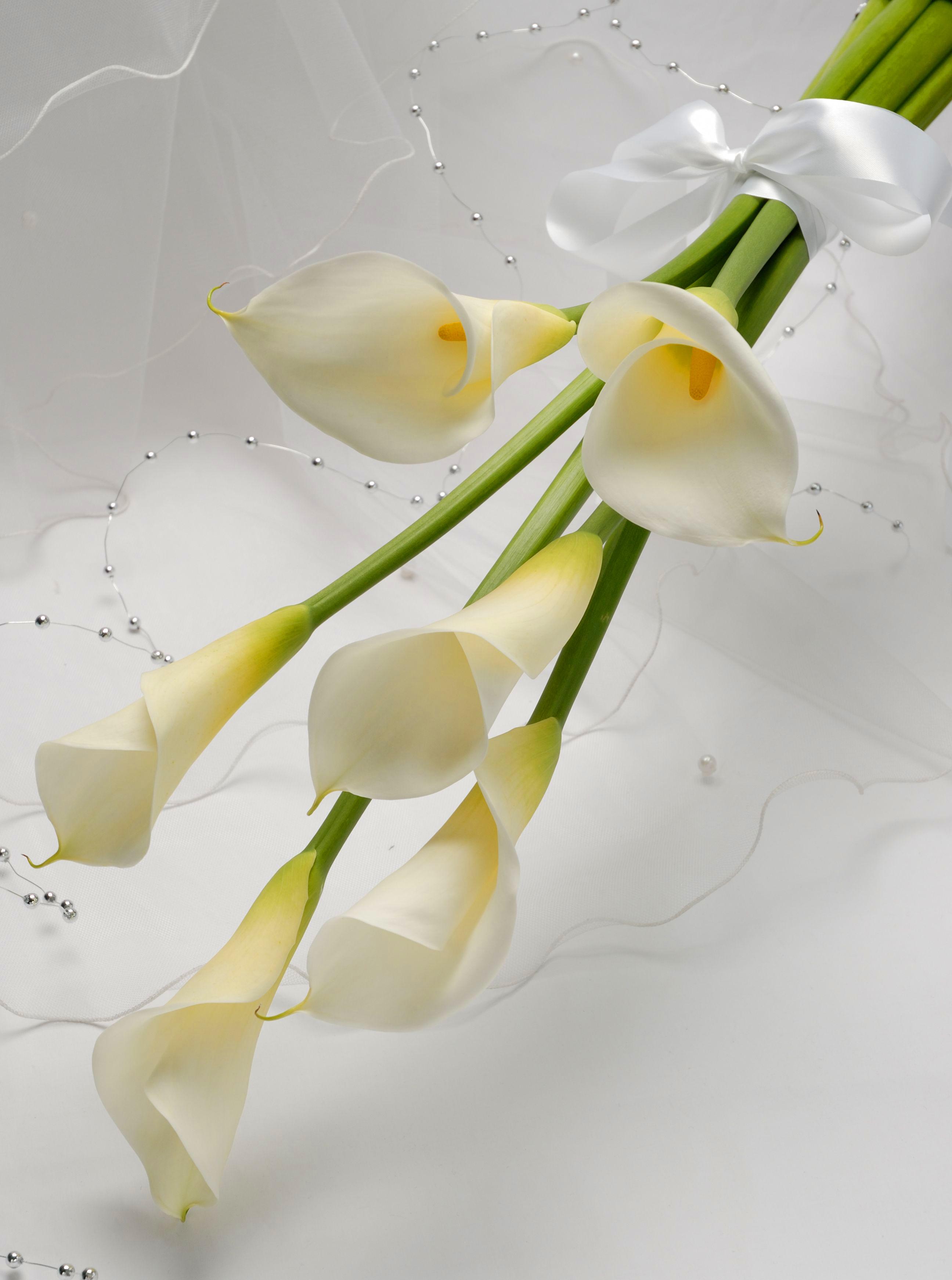Великолепные фото букетов цветов! Самые разные цветы в