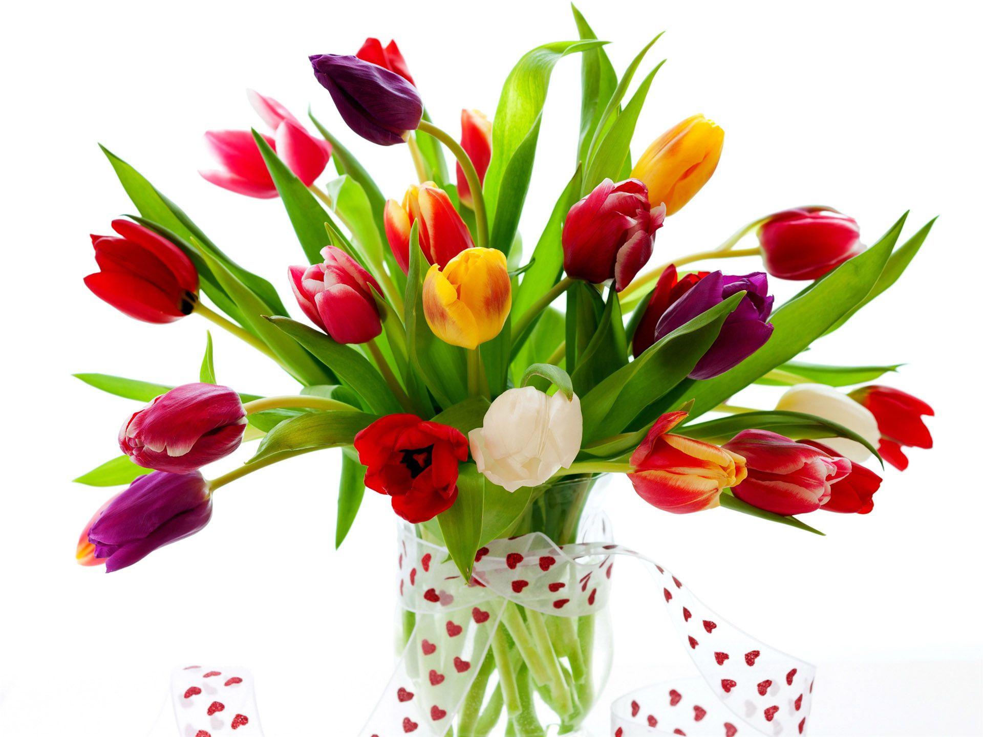 Много тюльпанов, клумбы с тюльпанами