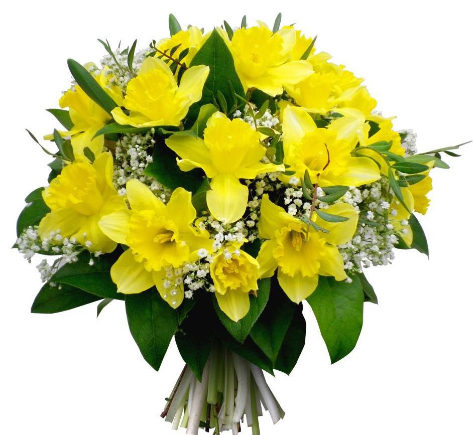 Цветы лилии фото  посадка и уход размножение и