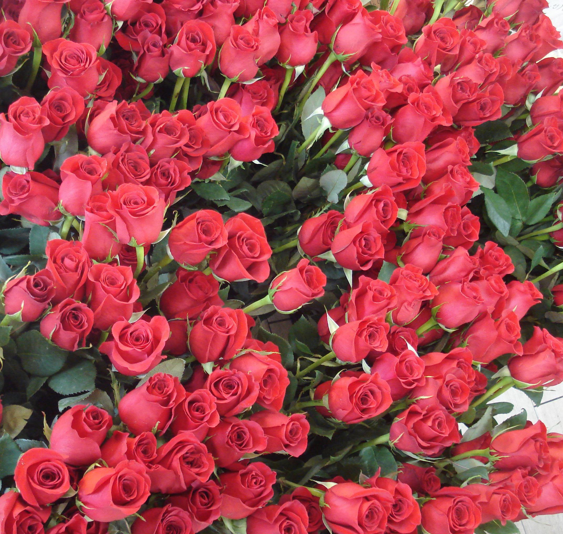 Цветы для любимой фото 24 фотография