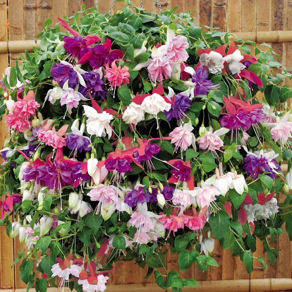 обои сад цветов