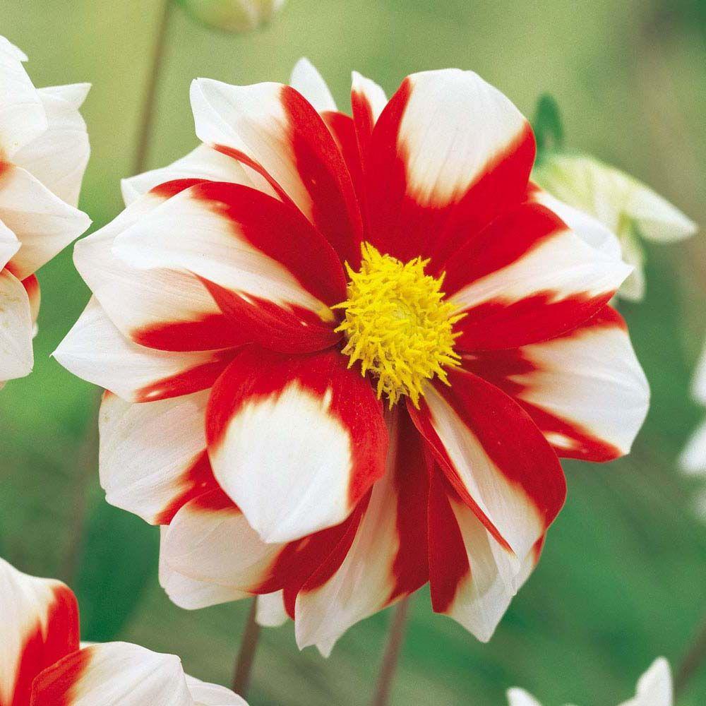 Новые цветы канзаши на ютубе