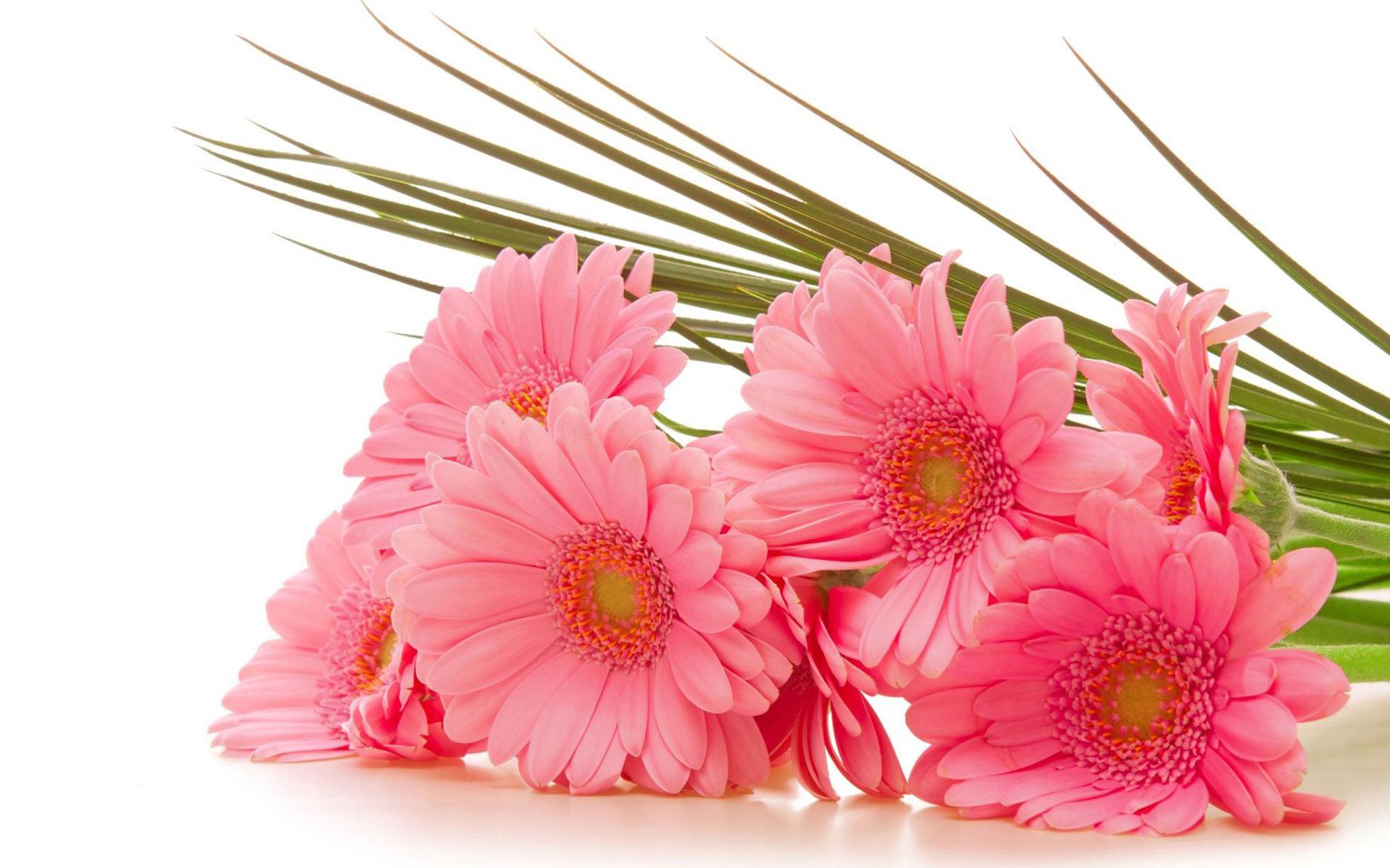 Поздравление с днем рождения картинки цветы фото 822