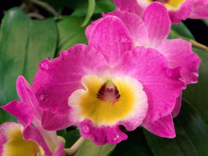 орхидея Фотографии картинки изображения и сток