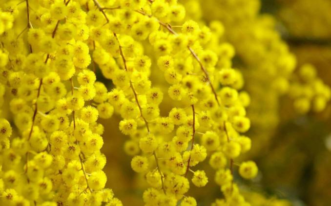 цветочные картинки