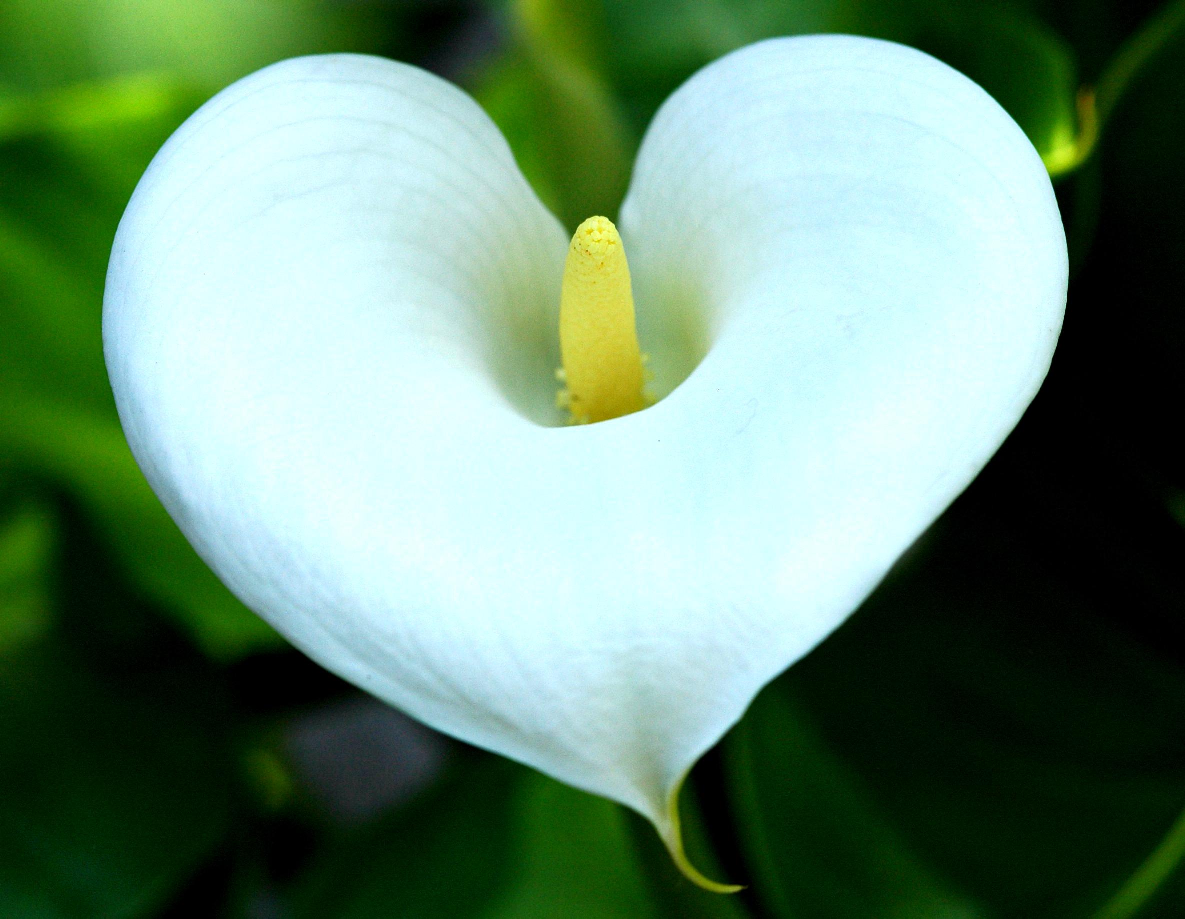 Картинка сердечка