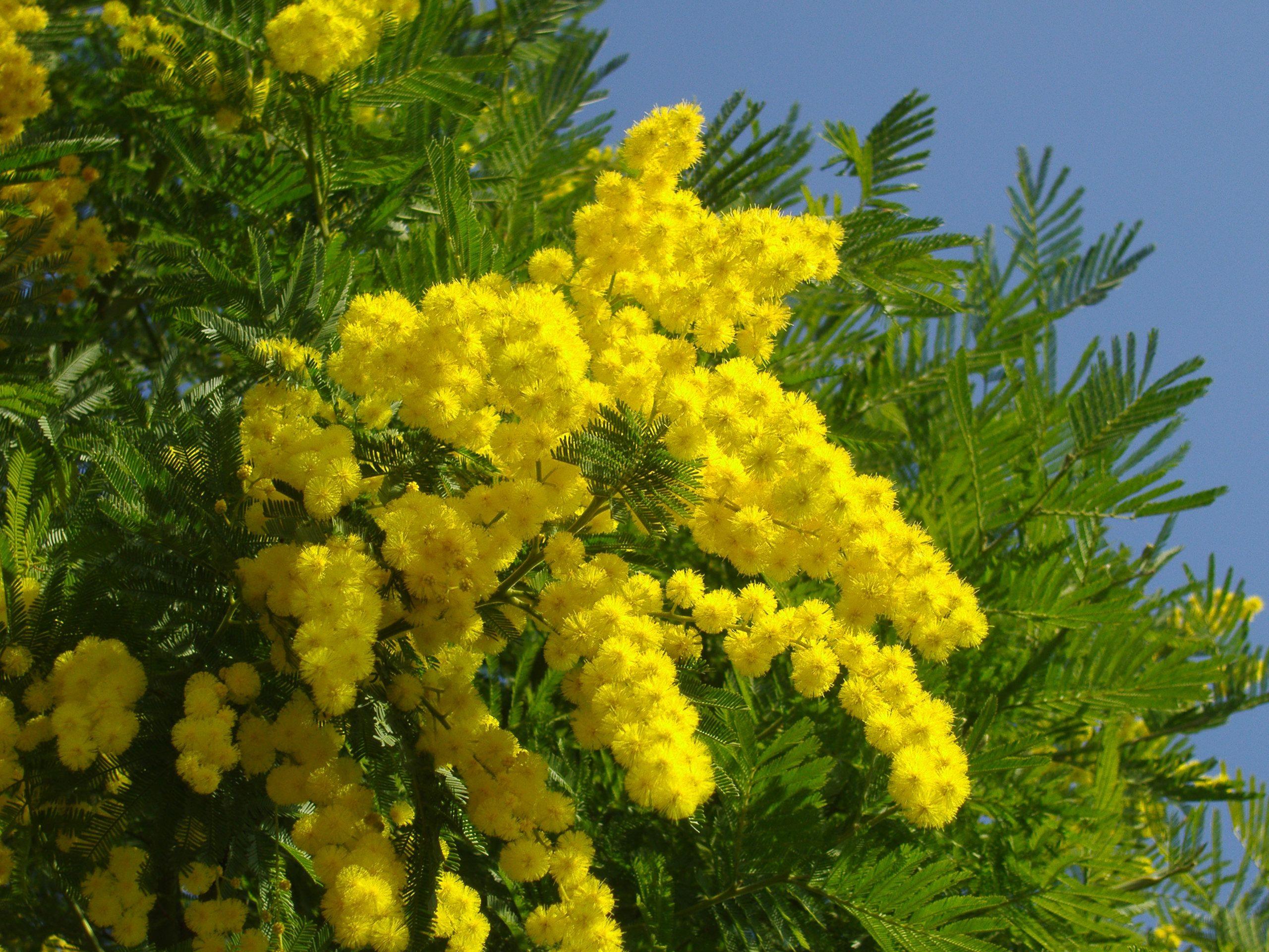 Цветы в творчестве Клода Моне