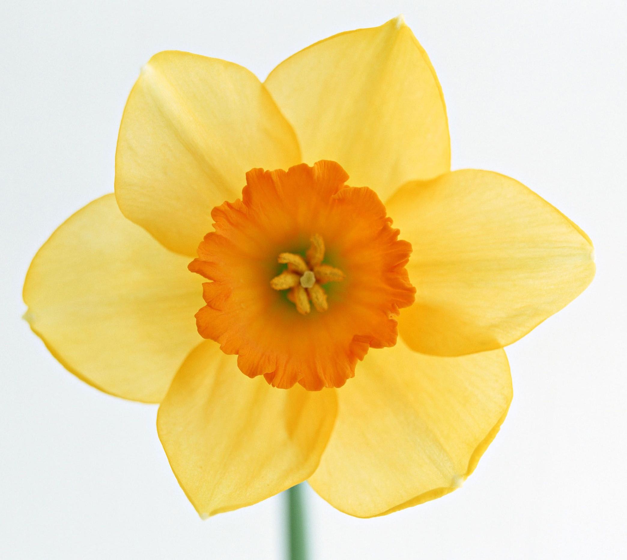 Топ25 Редкие и потрясающе красивые цветы