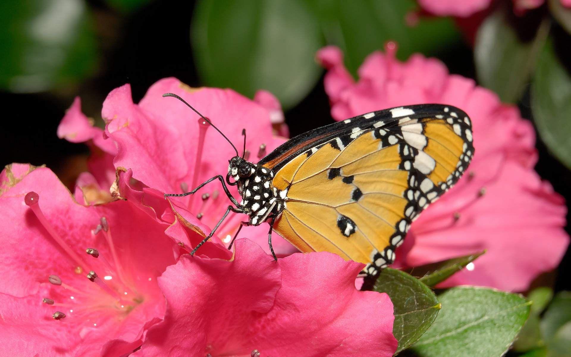 Фото цветов и бабочек самые красивые и редкие