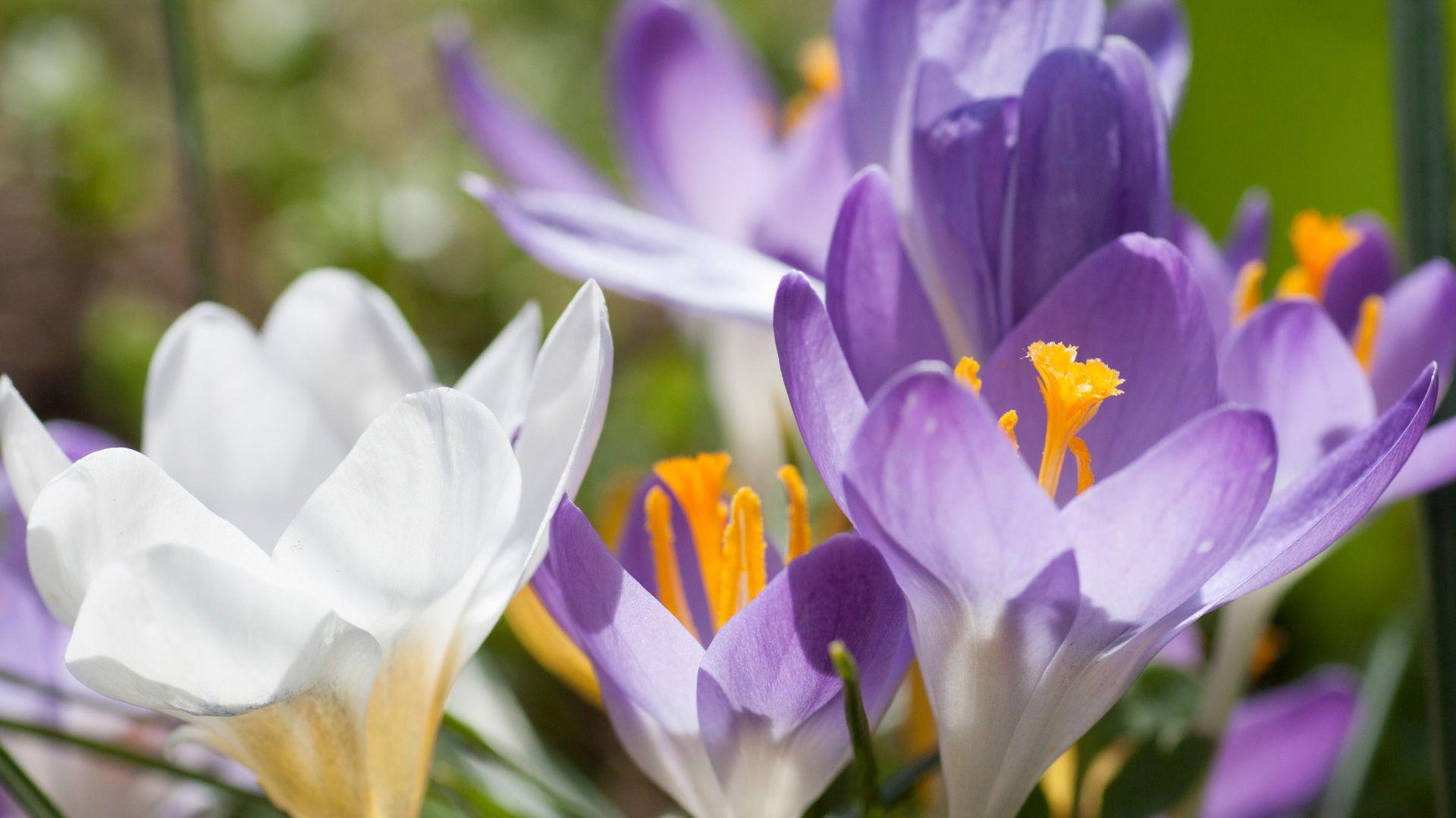Все весенние цветы по названиям и фото