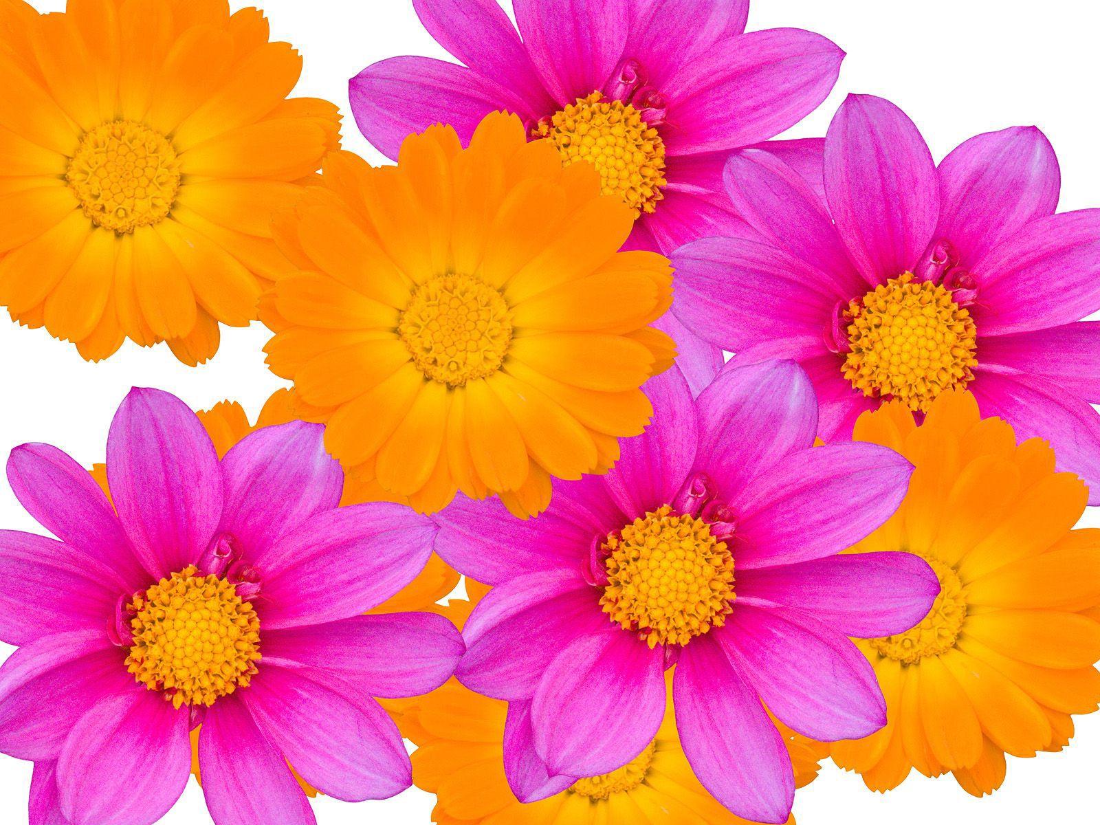 Фото очень красивых цветов 20 фотография