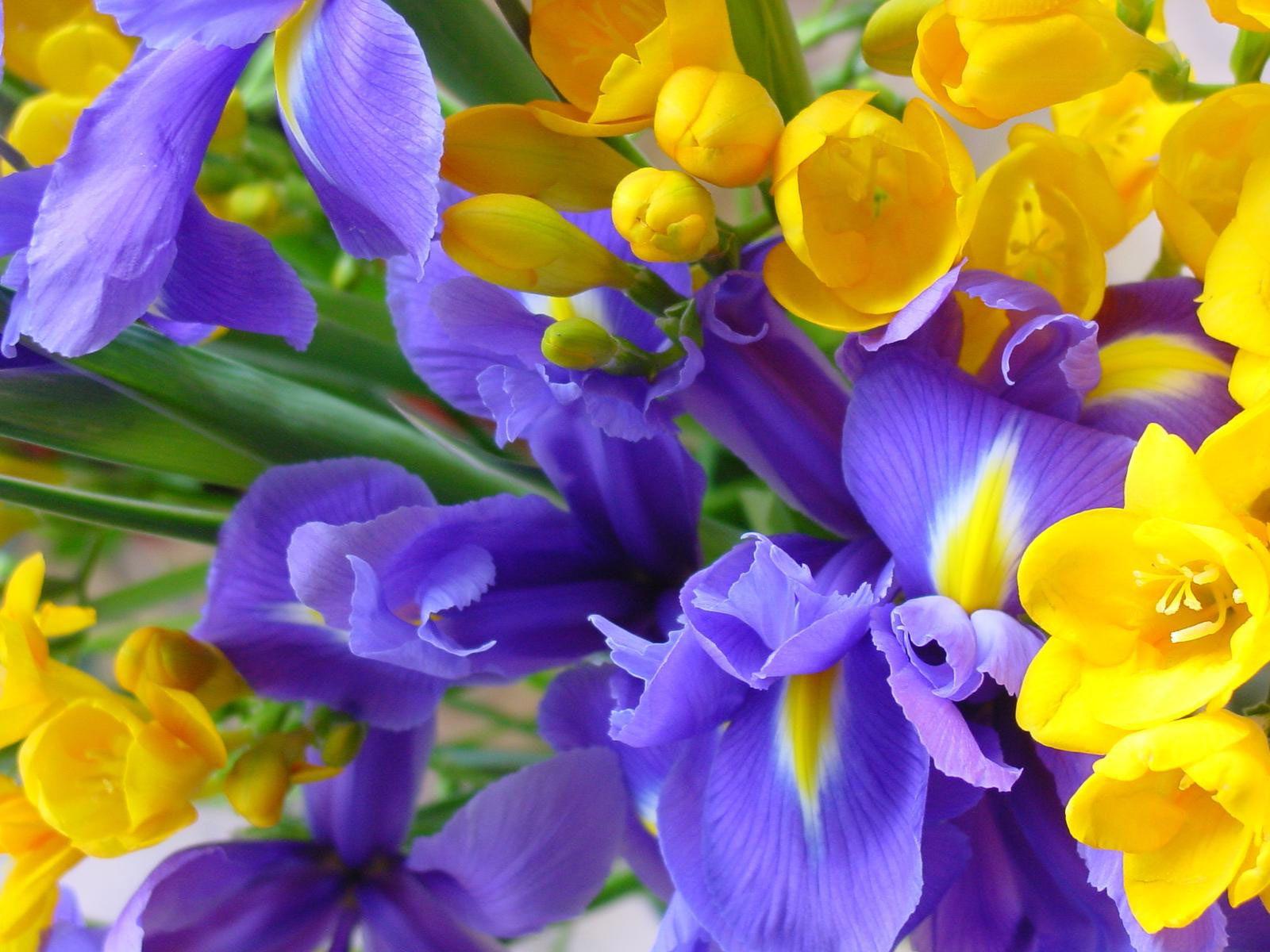 Бабочки и цветы картинки  Бабочки  поздравительные открытки