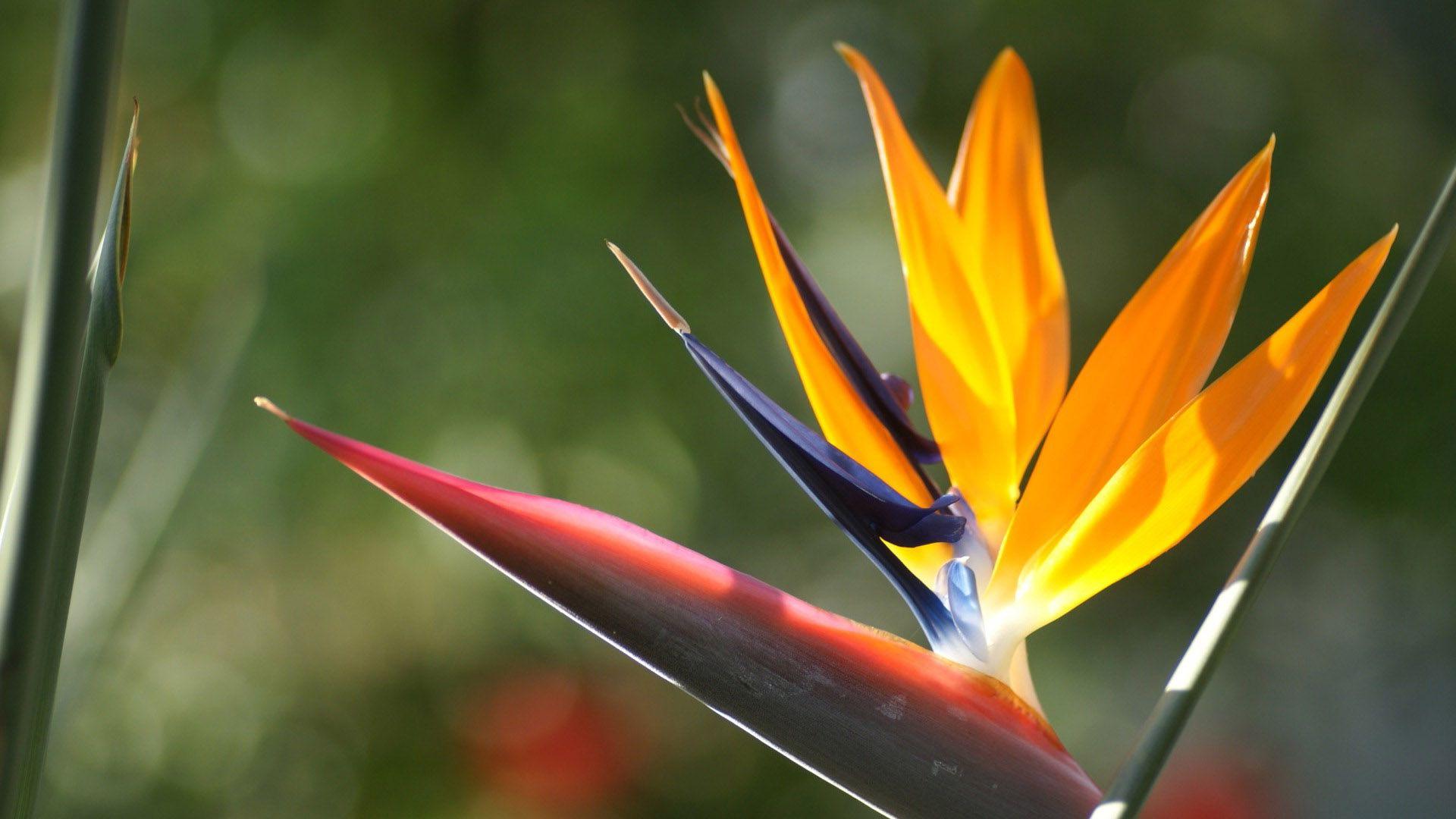 Желтый экзотический цветок