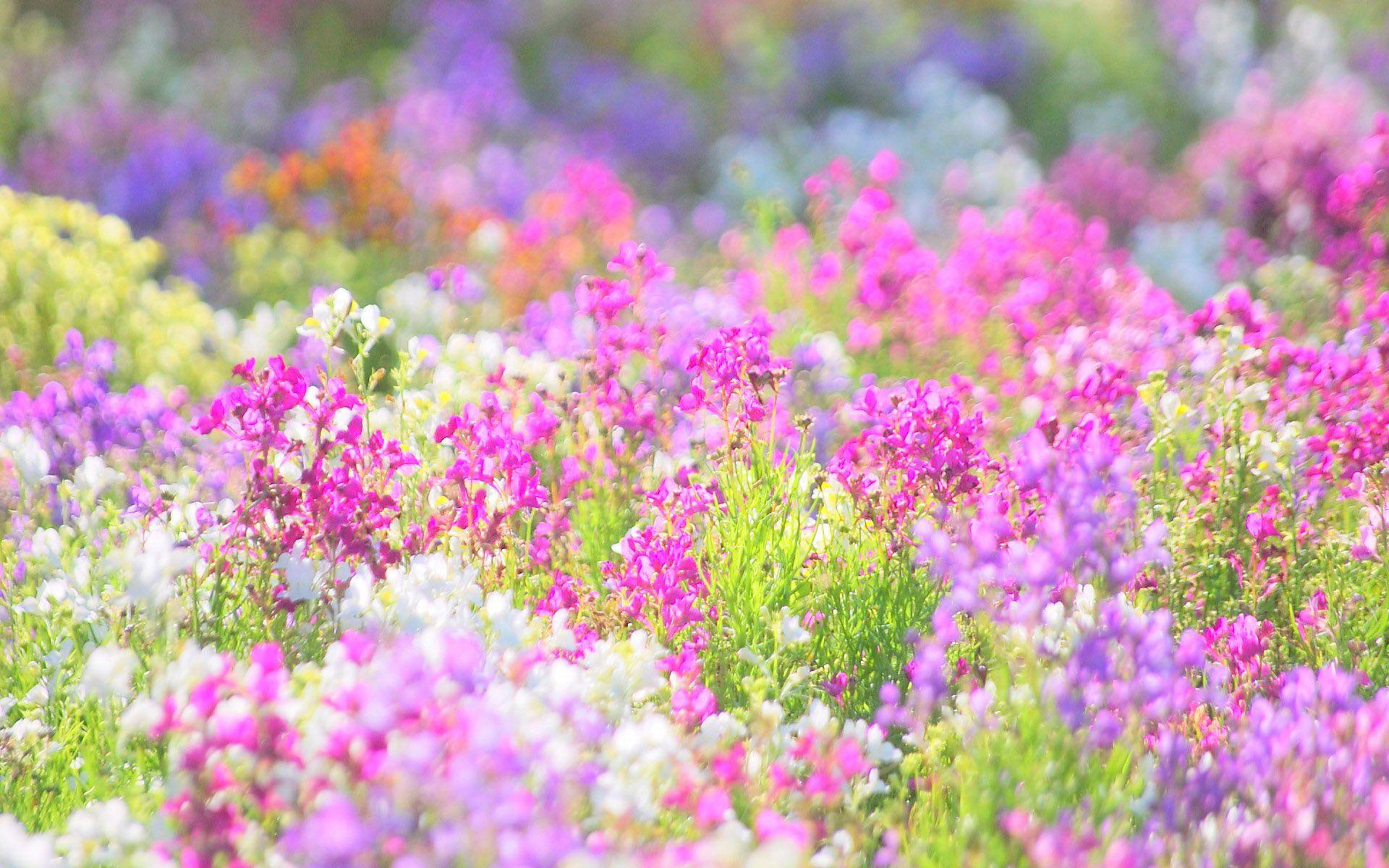 Очень красивые цветы и бабочки фото