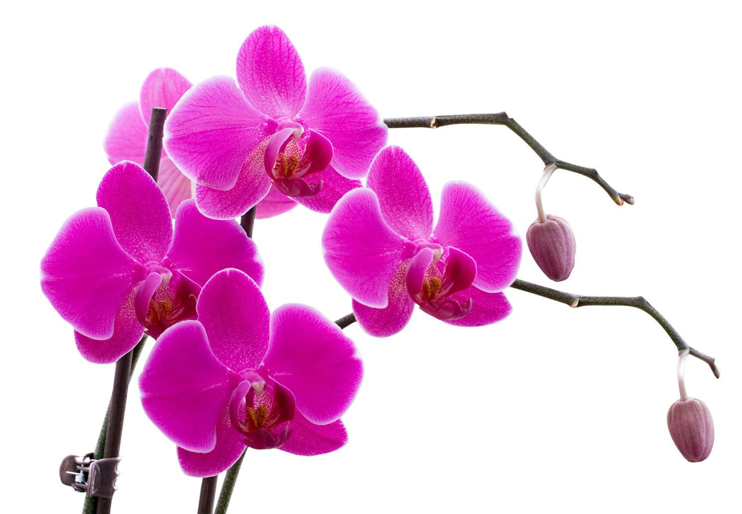 http://kartinki-cvetov.ru/images/orhidei/orhideja-105.jpg