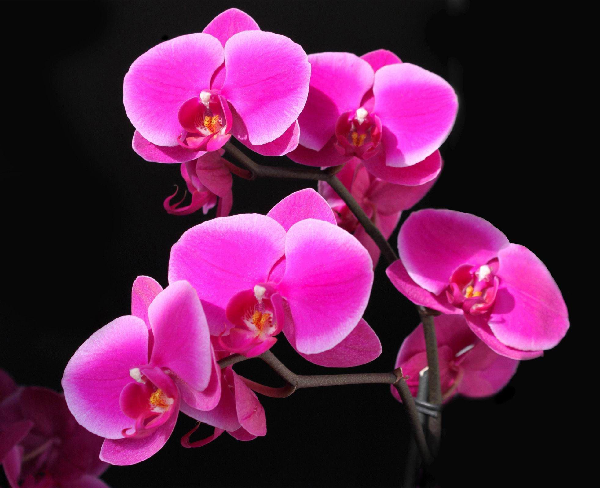 калла лилии фото