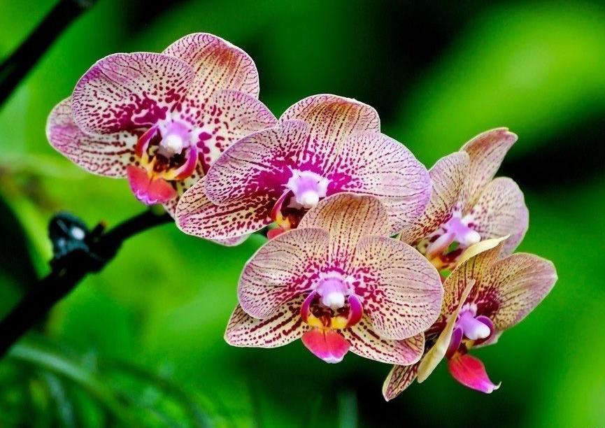 Обои на рабочий стол с орхидеями