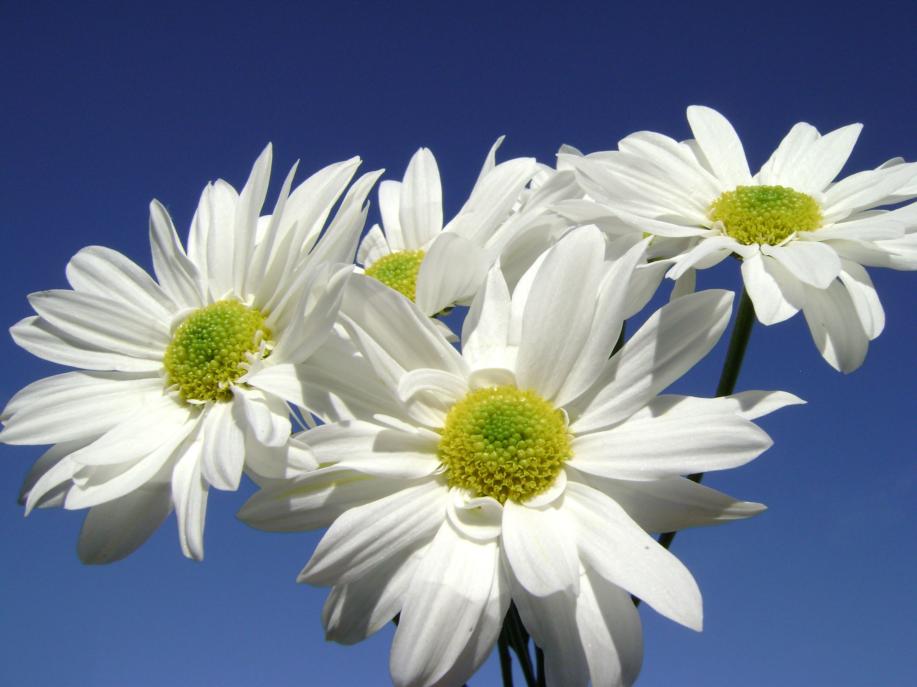 Стихи про цветы для детей  Детские стишки о цветах