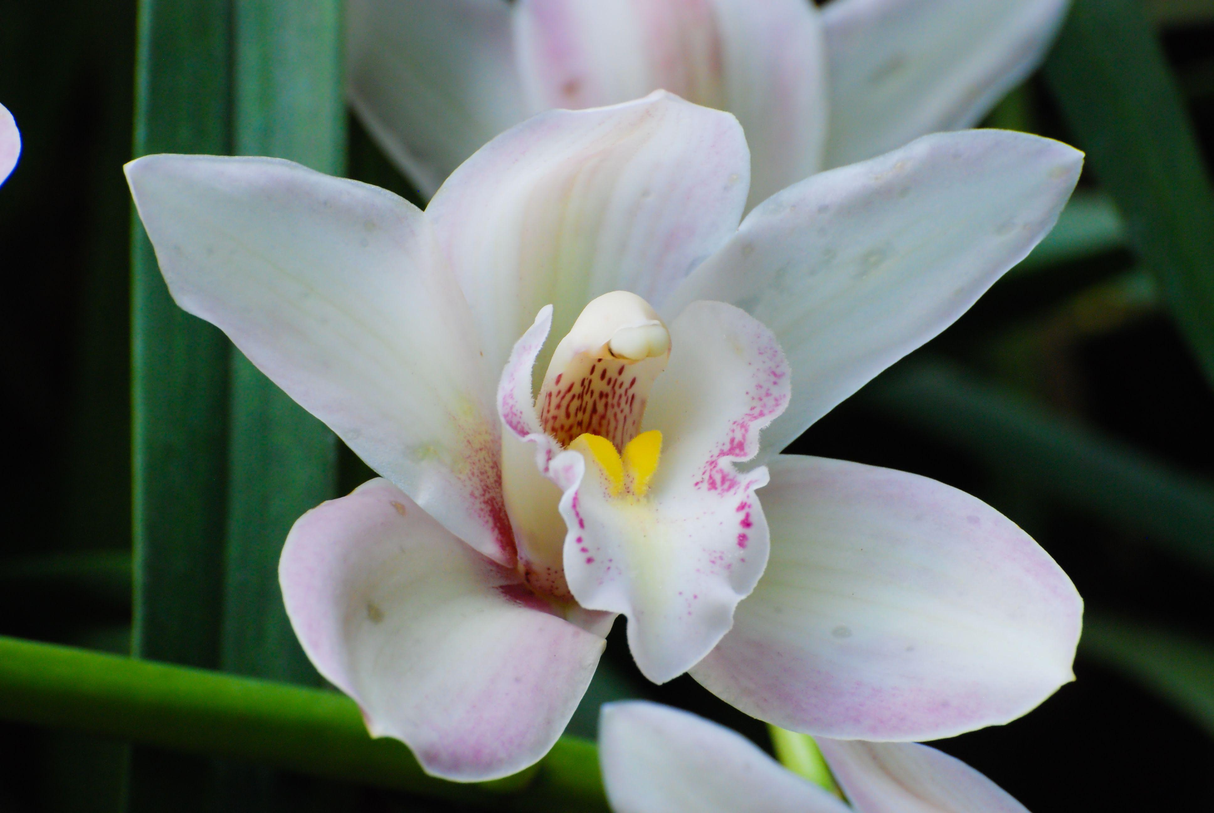 Белые цветки фото и название