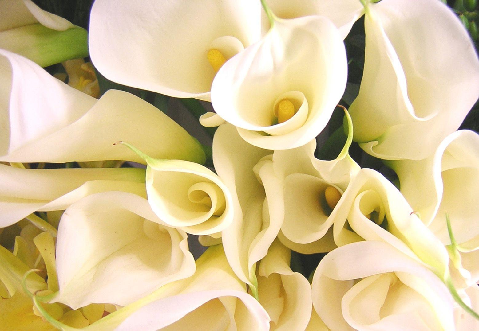 Букеты с цветов с названиями