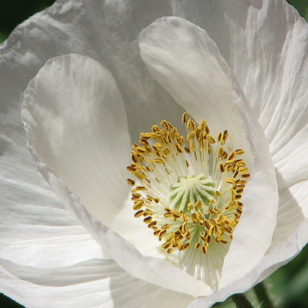 Белый цветок фото с названиями