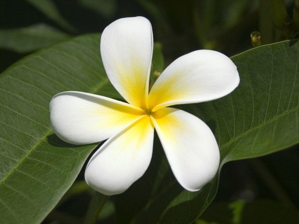 Цветы в подвесных горшках названия