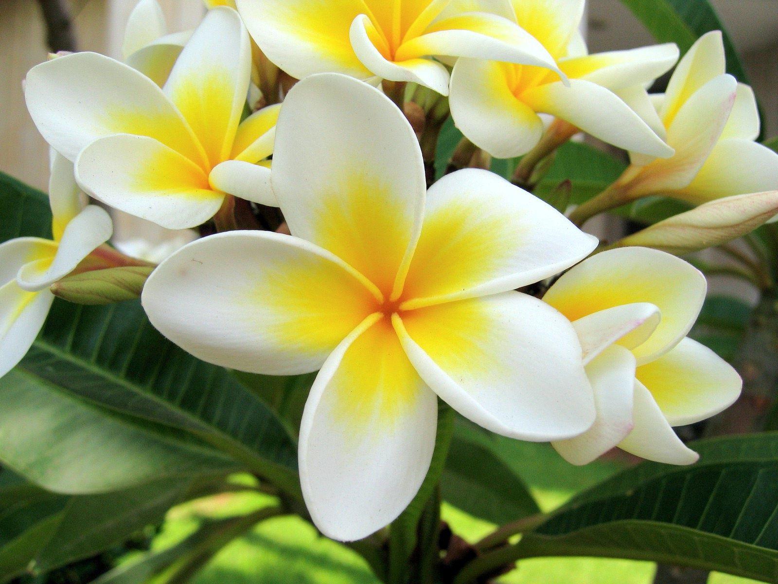 экзотика цветы фото