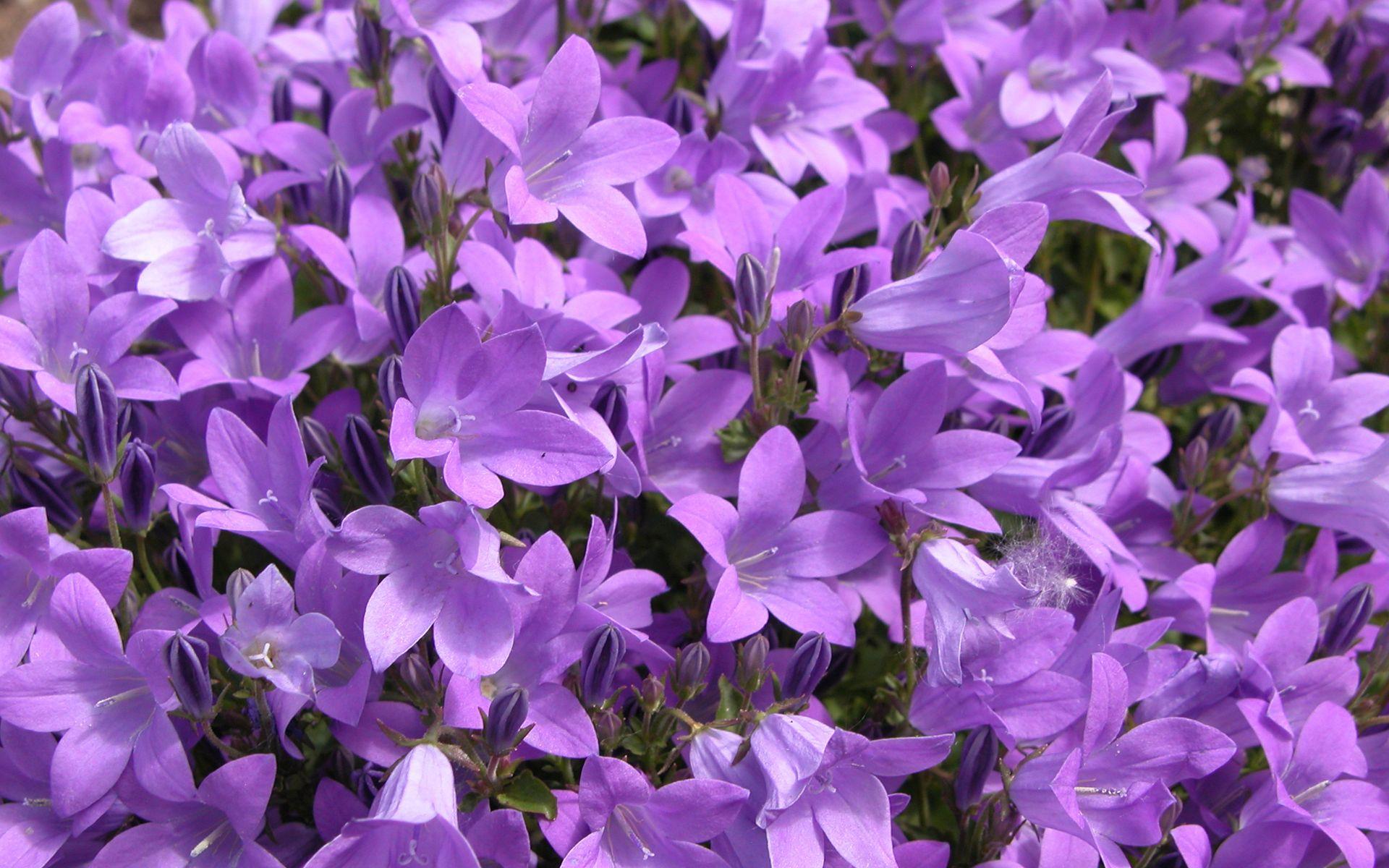 fioletovye-cvety19.jpg