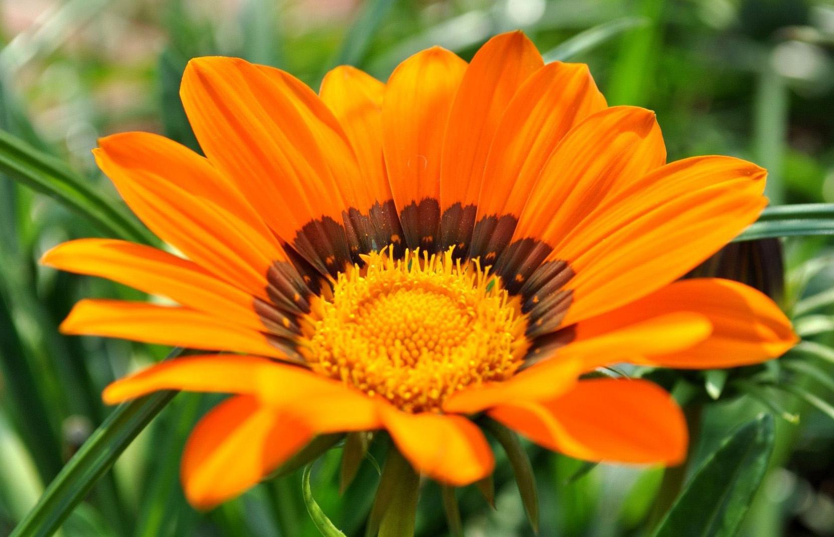Панорамные фото с цветами