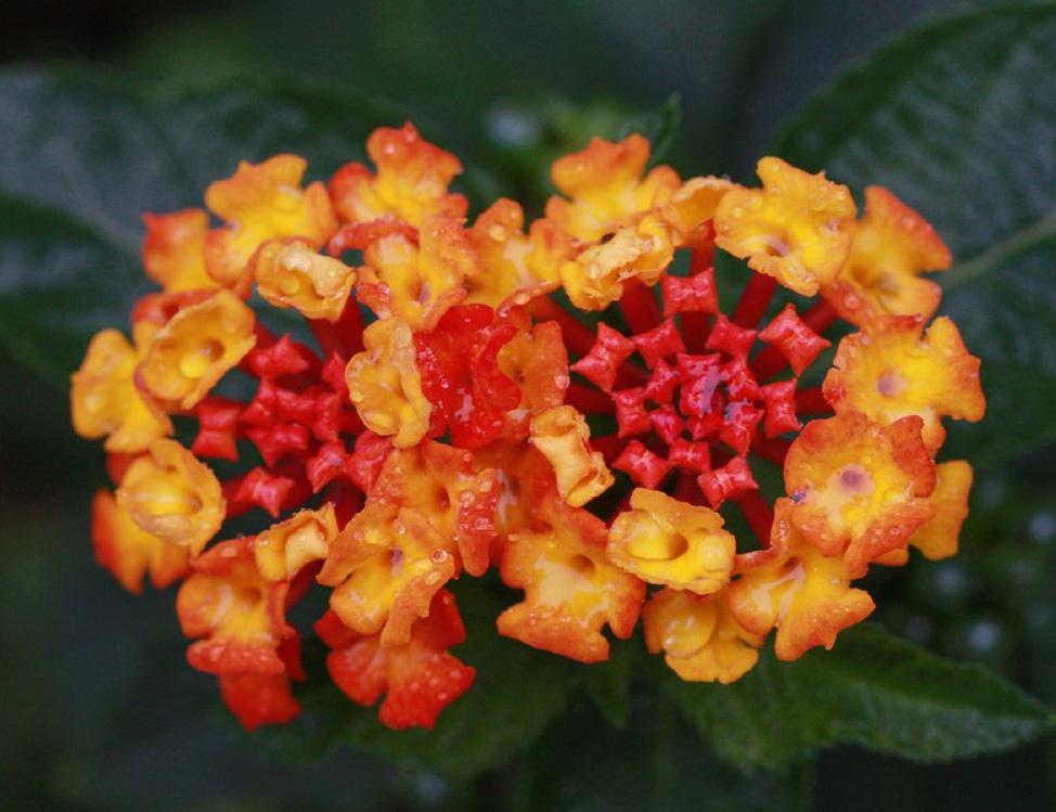 зимние цветы названия и