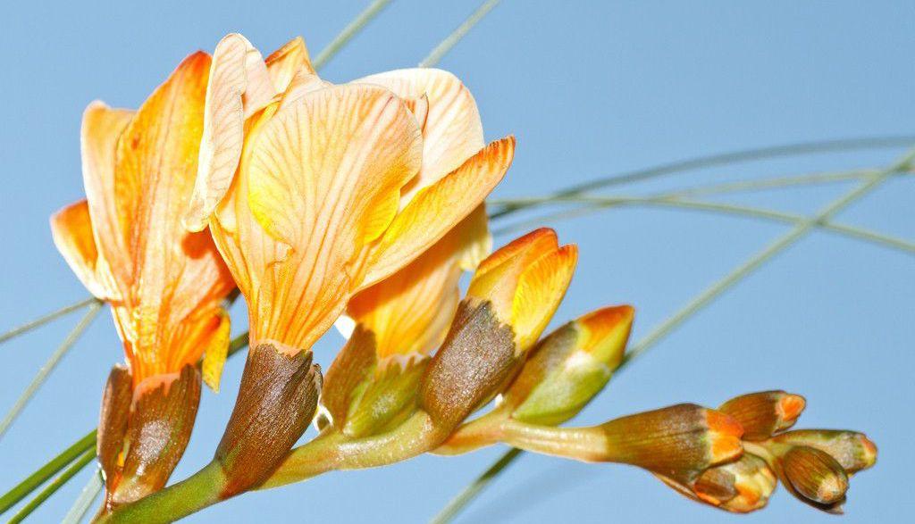 Экзотические цветы  и названия