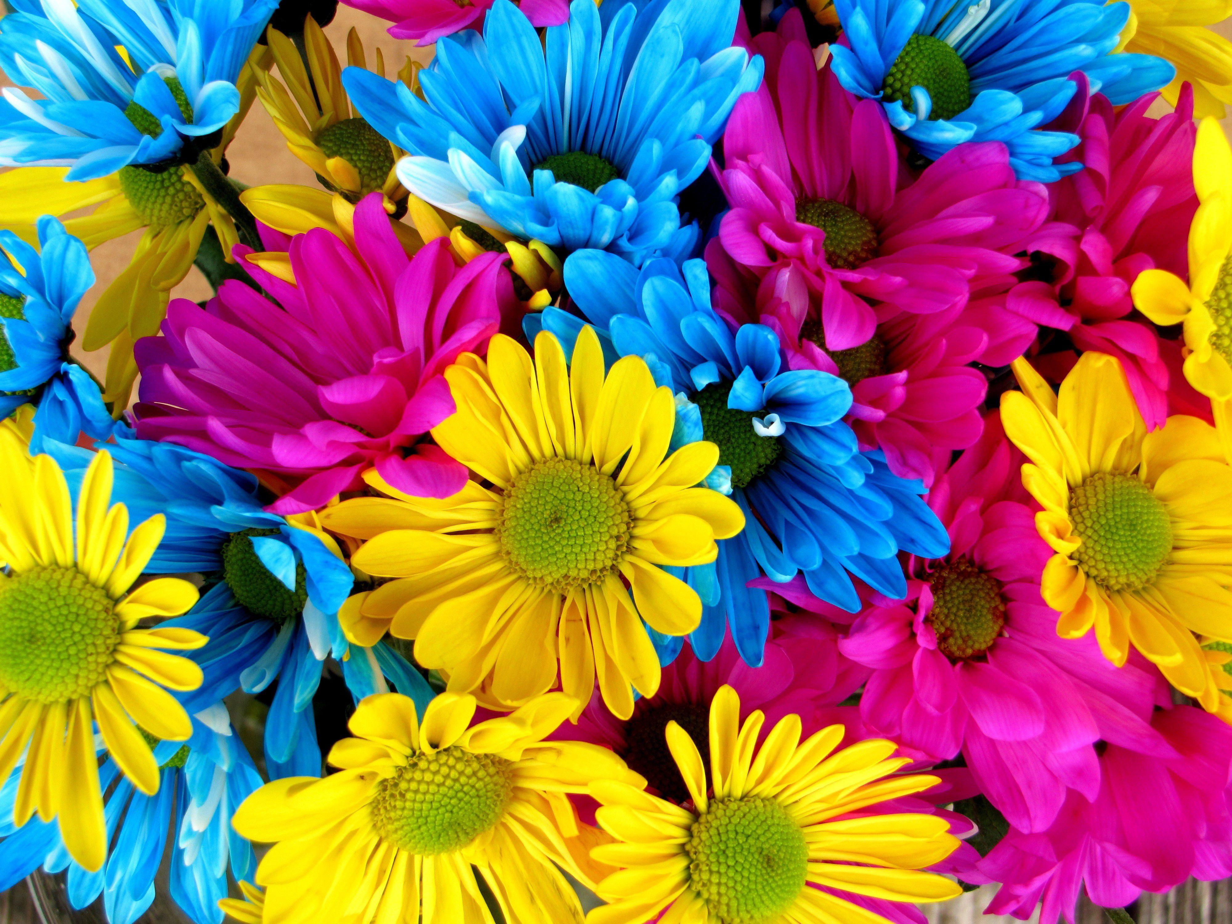 Поздравление с разными цветами 28