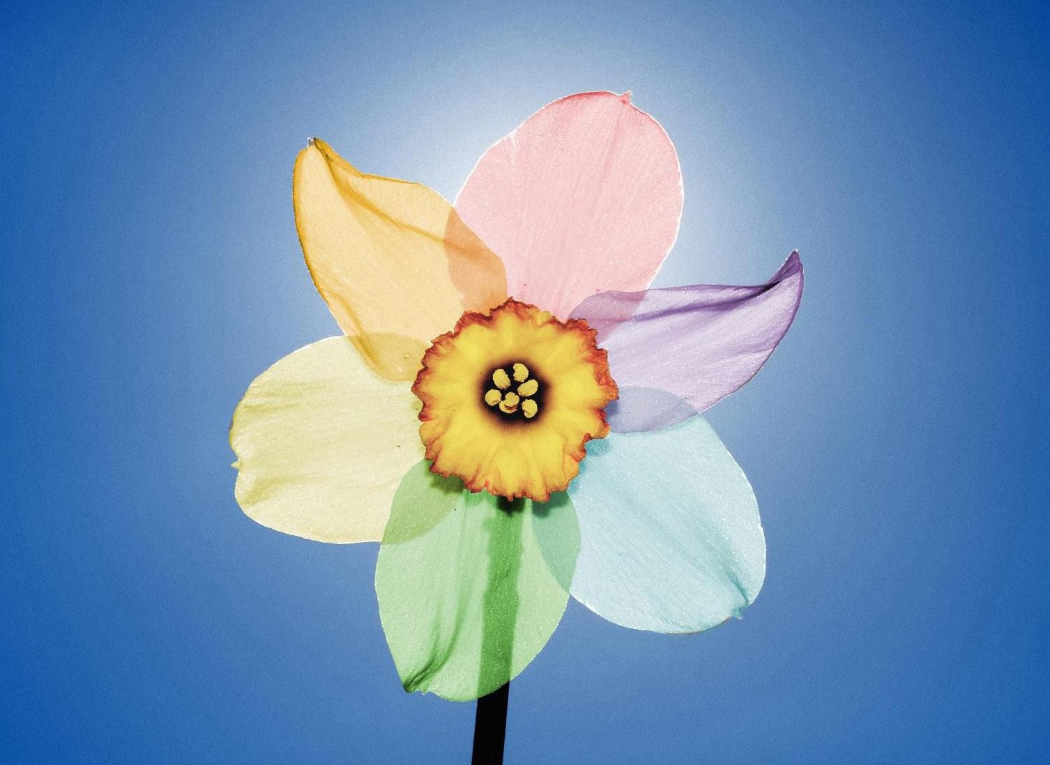Раскраски необычных цветов