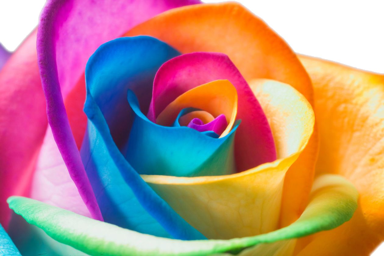 Цветы цветные