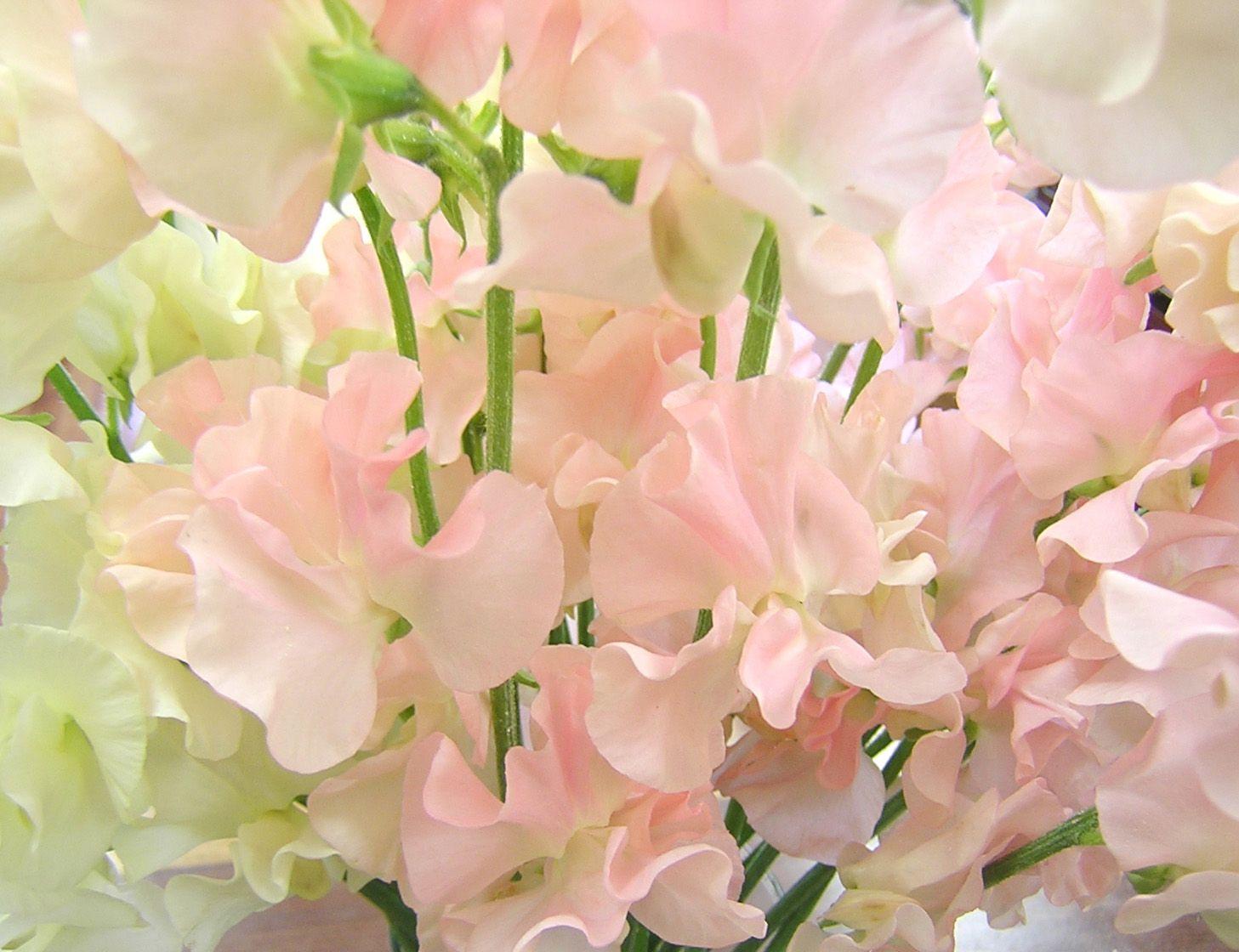 Картинки розовых цветов с названиями.: kartinki-cvetov.ru/kartinki-rozovyh-cvetov.html