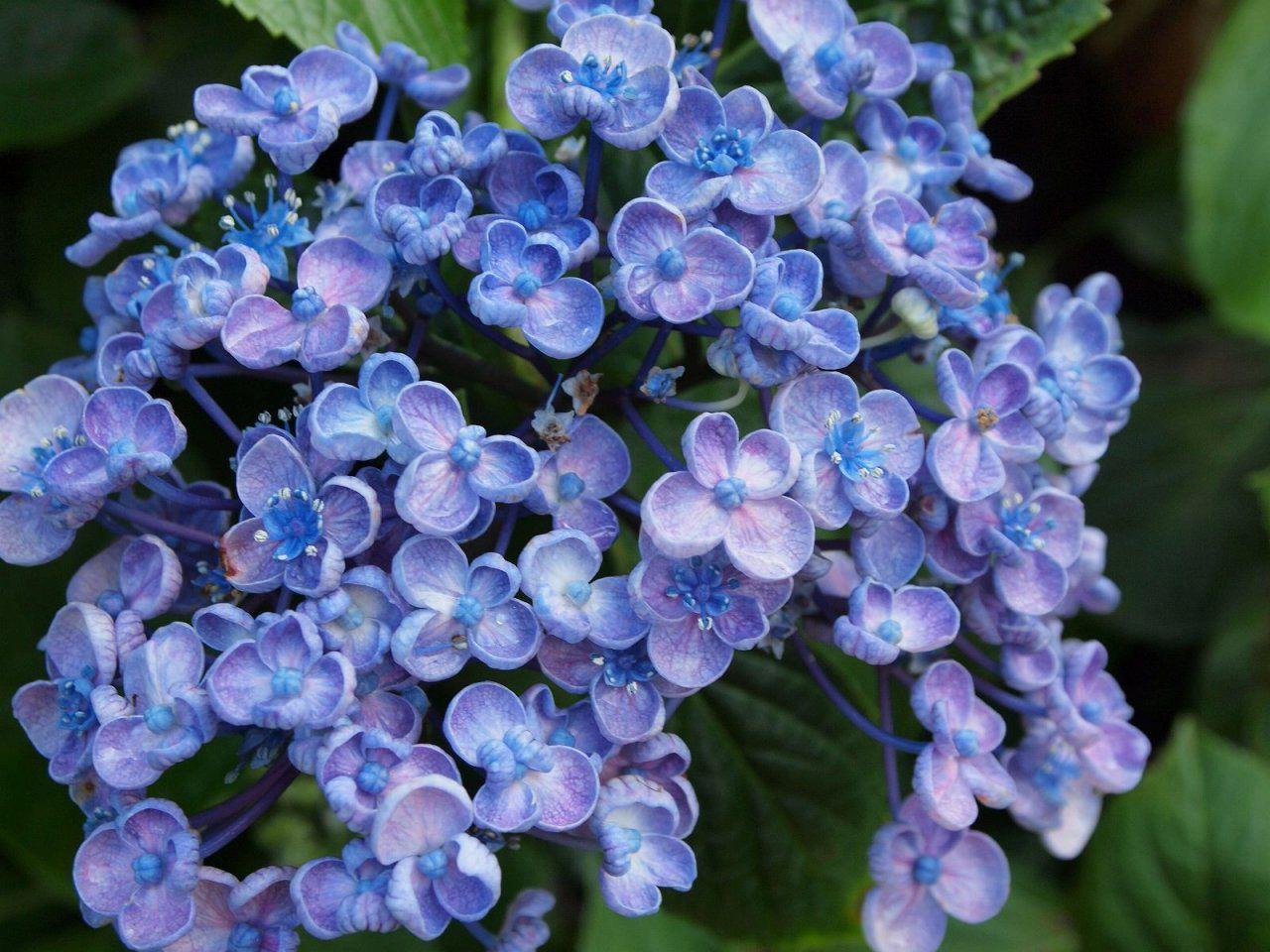 Цветок и соцветие фото