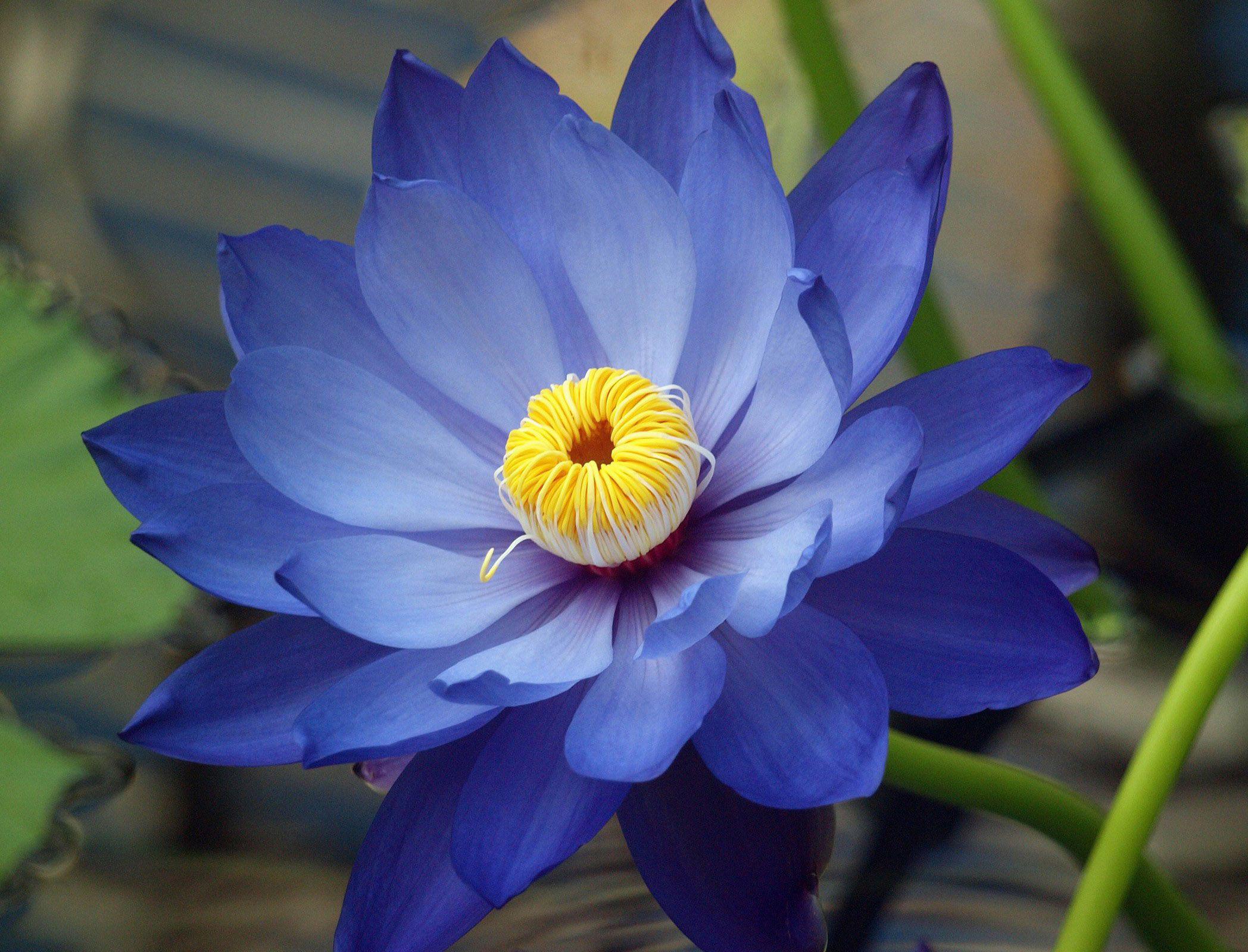 Цветы синие и голубые