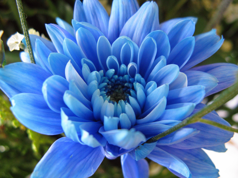 Картинки синие замшевые сапоги - 8