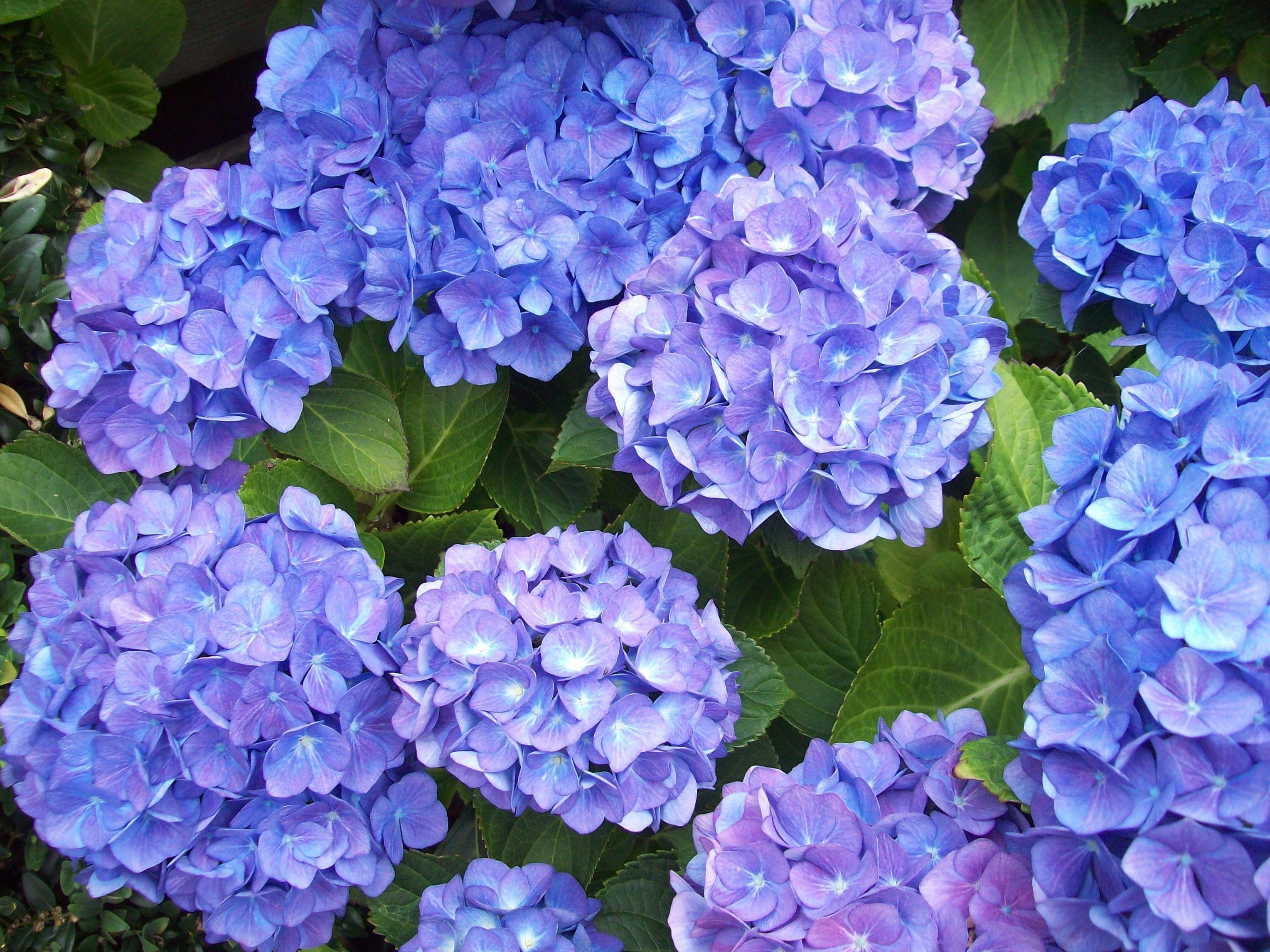Синие цветы на 74
