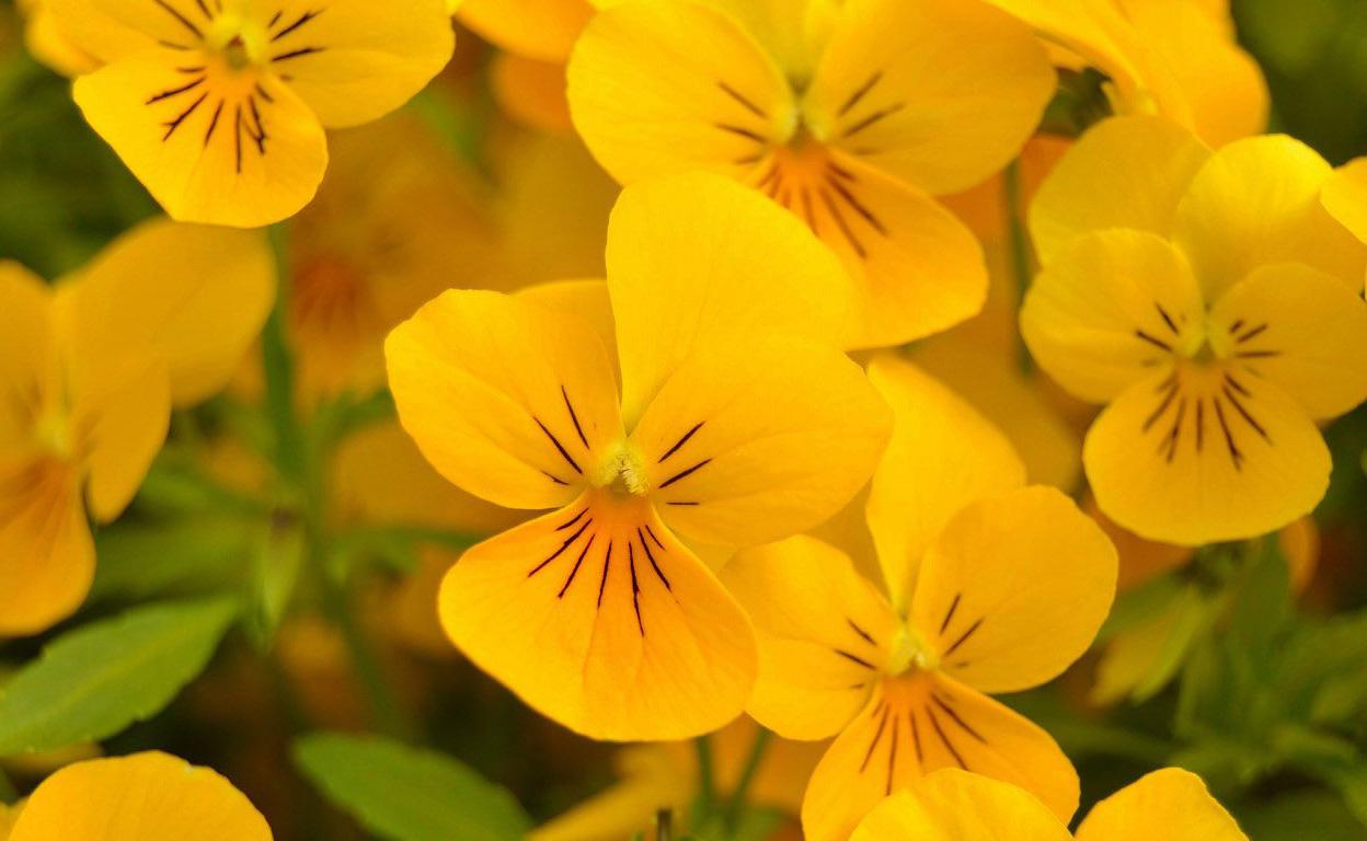 Садовые цветы названия и 94