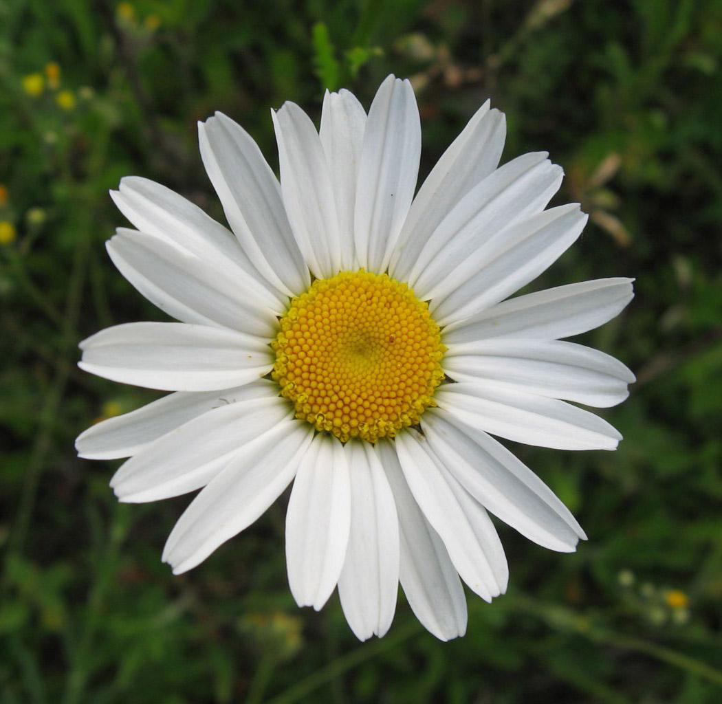 Фото цветы за спиной